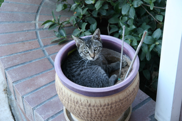 Leia in flower pot.
